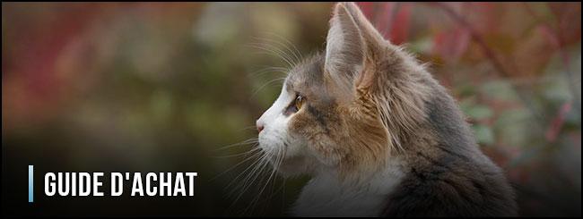 guía-de-compra-de-gatos-con-chip-electrónico-para-gatos