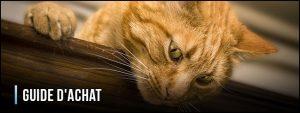 guide-d'achat-fontaine-a-eau-pour-chat