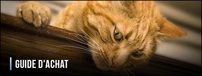 guía-de-compra-de-fuentes-para-gatos