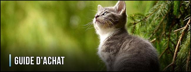 guía-de-compra-de-arena-para-gatos