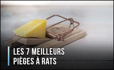 mejor-trampa-una-rata