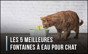 mejor-fuente-de-agua-para-gato